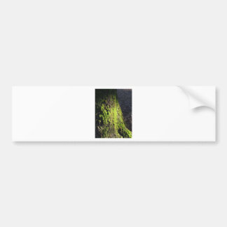 Green moss in nature  Detail of moss covered trunk Bumper Sticker