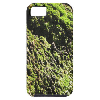 Green moss in nature  Detail of moss covered trunk Case For The iPhone 5