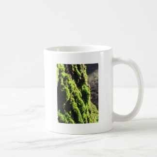 Green moss in nature  Detail of moss covered trunk Coffee Mug