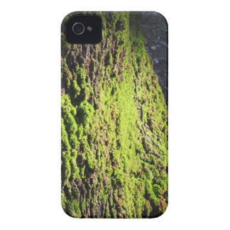 Green moss in nature  Detail of moss covered trunk iPhone 4 Cover