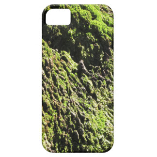 Green moss in nature  Detail of moss covered trunk iPhone 5 Covers
