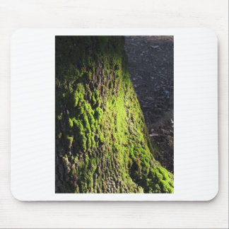 Green moss in nature  Detail of moss covered trunk Mouse Pad