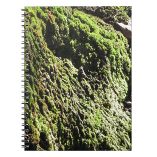 Green moss in nature  Detail of moss covered trunk Notebook
