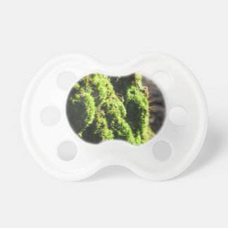 Green moss in nature  Detail of moss covered trunk Pacifier