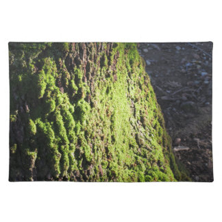 Green moss in nature  Detail of moss covered trunk Placemat