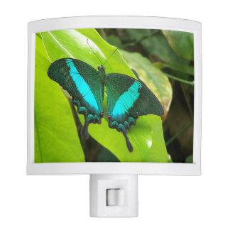 Green Moss Peacock Butterfly night light