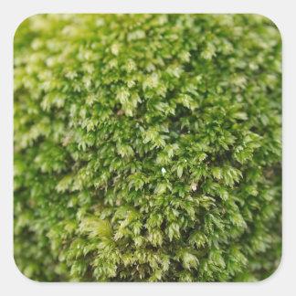Green Moss Square Sticker