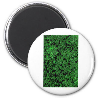 Green nature Leafs natural natural  Green Trees Ea 2 Inch Round Magnet