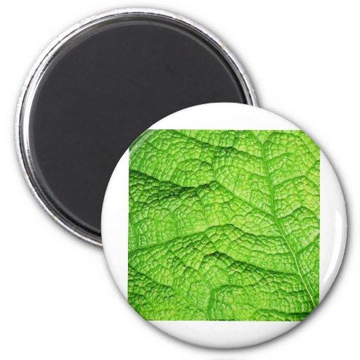 Green nature Leafs natural natural  Green Trees Ea Refrigerator Magnet