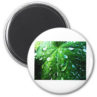 Green nature Leafs natural Water drop Clear Crysta 2 Inch Round Magnet