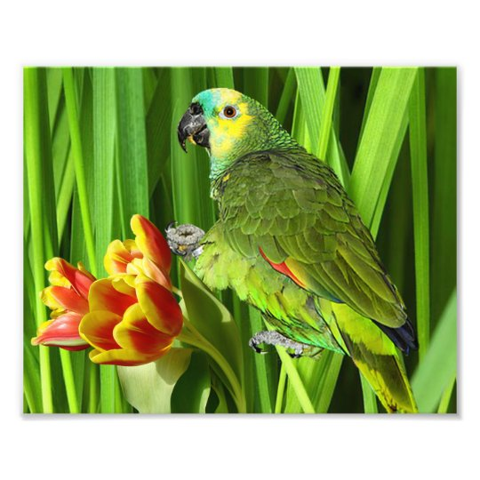 Green Nature With Parrot Photo Print