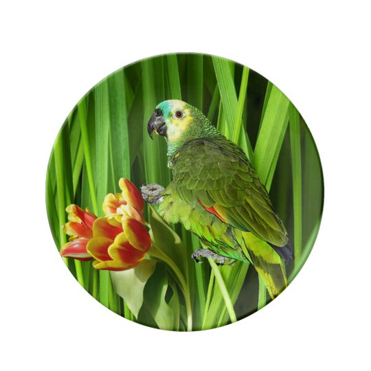 Green Nature With Parrot Porcelain Plates