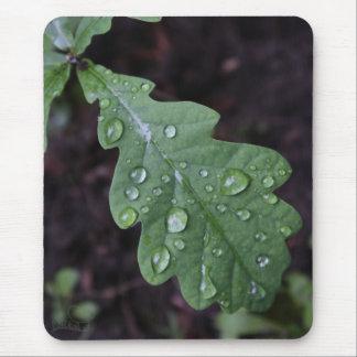 Green oak leaf in rain mouse pad