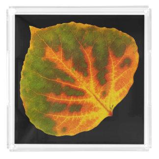 Green Orange & Yellow Aspen Leaf #1 Acrylic Tray