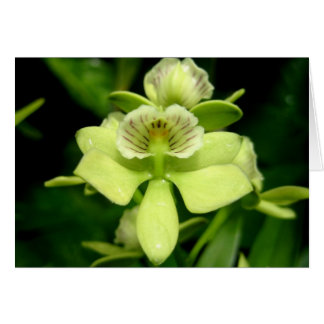 Green Orchid Stationery Note Card