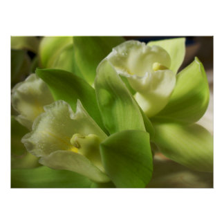 Green Orchids Silk and Satin 1 Poster