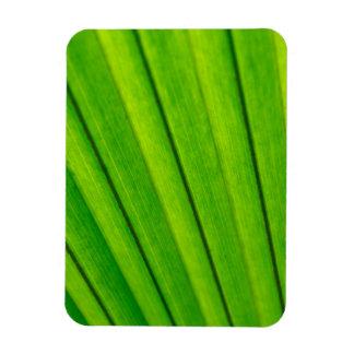 Green palm tree leaf texture rectangular photo magnet