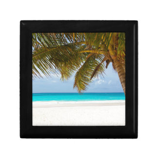 Green Palm Tree on Beach during Daytime Gift Box