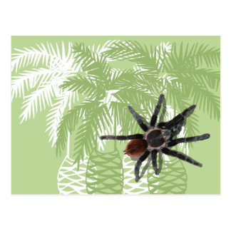 Green palm trees with tarantula post cards