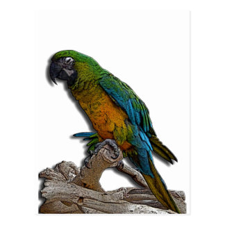 Green Parrot alone postcard