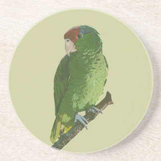 Green Parrot Drink Coaster