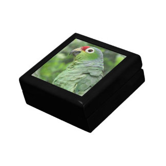 Green Parrot  Gift Box