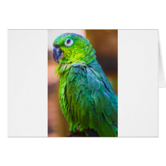 Green Parrot Greeting Card