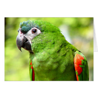 Green Parrot Greeting Card 2