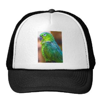 Green Parrot Hat
