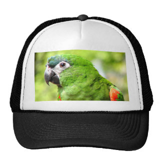 Green Parrot Hat 2