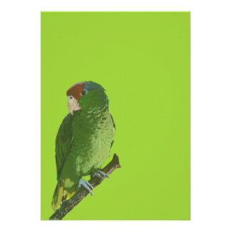 Green Parrot Personalized Announcement