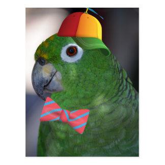 green parrot kid friendly postcard