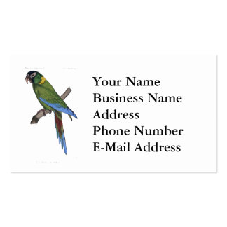 Green Parrot Macaw Painting Business Card