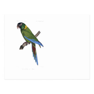Green Parrot Macaw Painting Postcard