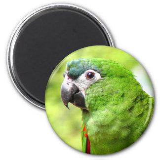 Green Parrot Magnet 2