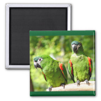 Green Parrot Magnet 3