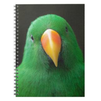 Green Parrot Notebooks