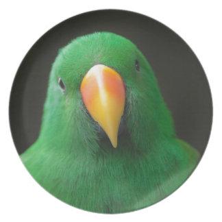 Green Parrot Plate