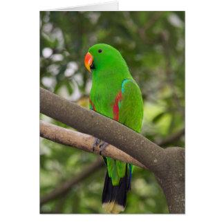 Green Parrot Portrait Card