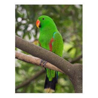 Green Parrot Portrait Postcard