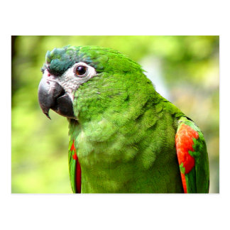 Green Parrot Postcard 2