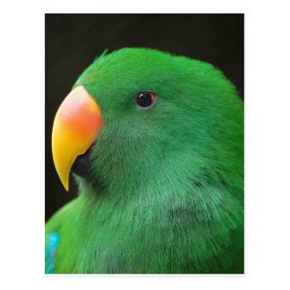 Green Parrot Profile Postcard