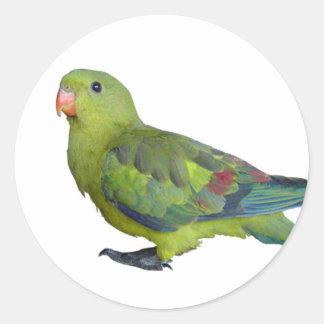 Green Parrot Round Sticker