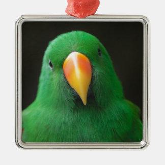 Green Parrot Silver-Colored Square Ornament