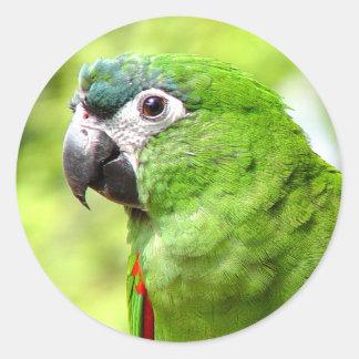 Green Parrot Sticker 2