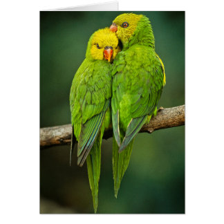 Green Parrots Love Birds Photography Note Card