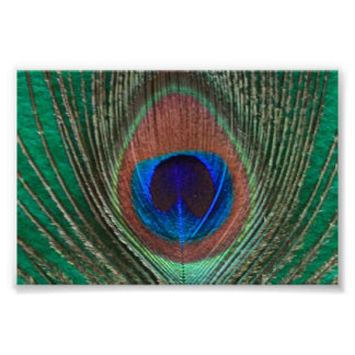 Green Peacock Feather Framed Print