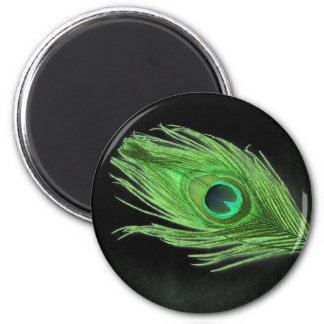 Green Peacock Feather on Black Refrigerator Magnets