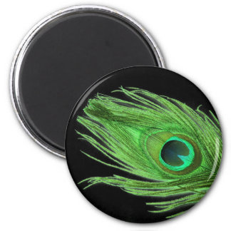 Green Peacock Feather on Black Magnet
