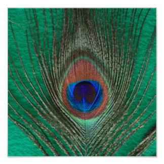 Green Peacock Feather Poster